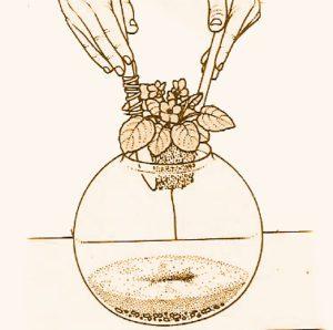 Terrario come coltivare le piante in vetro