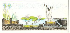 Giardini come costruire una vasca per piante acquatiche a vari livelli