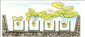 sistemazione delle piante