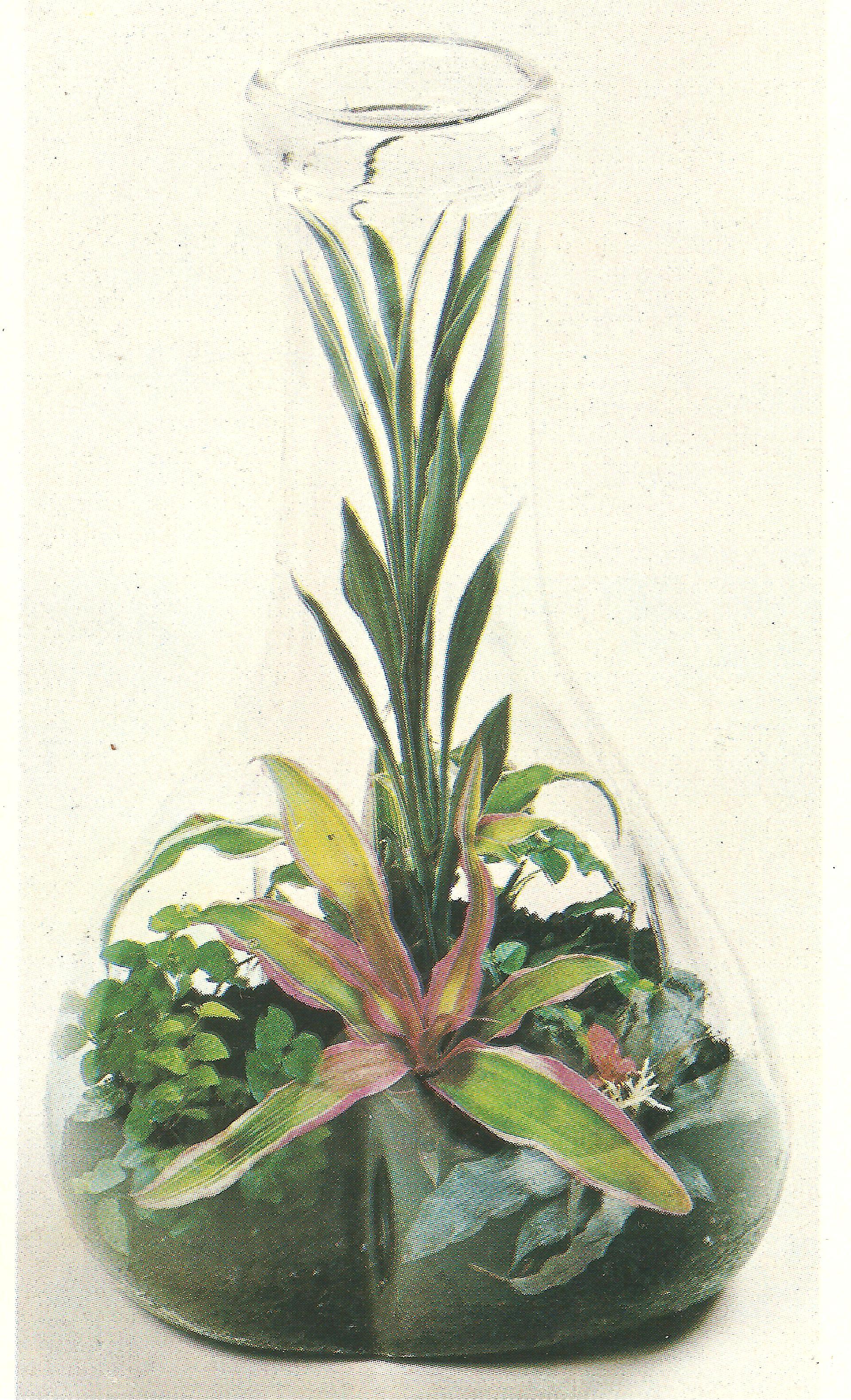 Terrario come coltivare le piante nel vetro